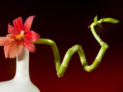 Ikebana-Bambus und Orchidee