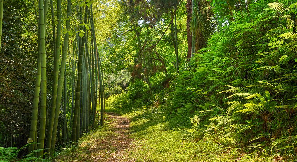 Foto eines japanischen Walds