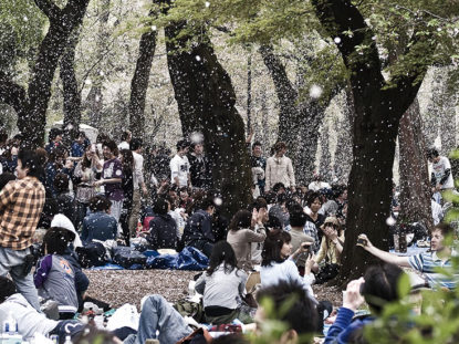 Japan 151 - Kirschblüte